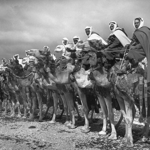 3WA - Bedouin