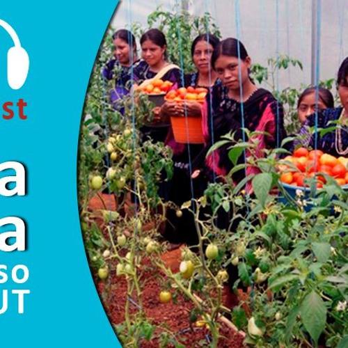Podcast - Soberanía Alimentaria, caso Organización Majomut - entrevista con Betzabé Hernández