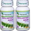 Numerous Benefits Of Phyllanthus Niruri For Good Health - Dr Vikram Chauhan