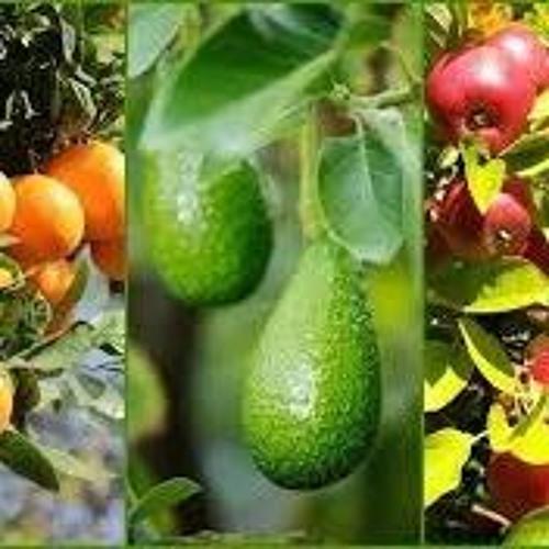 Garden Fruit
