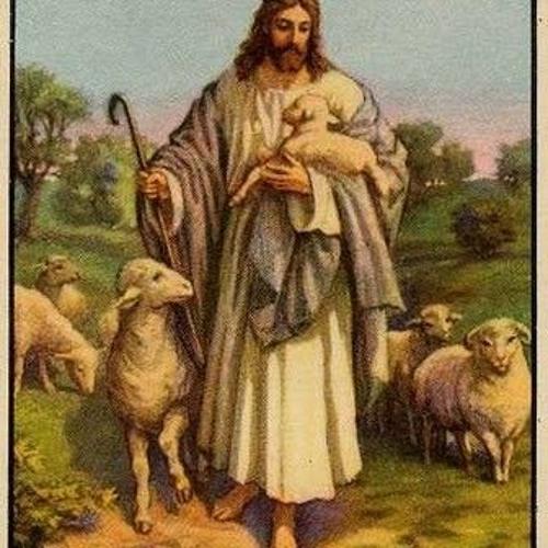 Shepherd Me