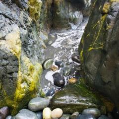 Flea Beach Crevice
