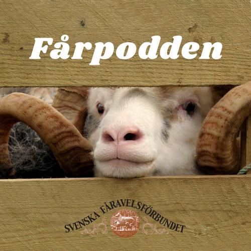 #4 Fårpodden: Att starta med får