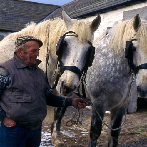 Ploughing Horses