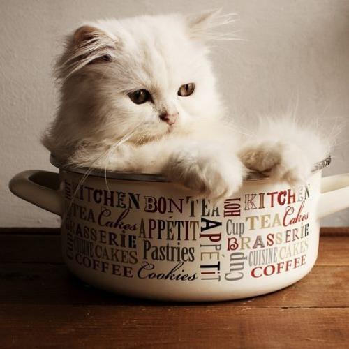 Unejutt valgest kassipojast