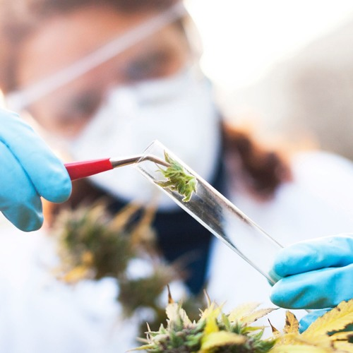 Is there anything wrong with medicinal cannabis?