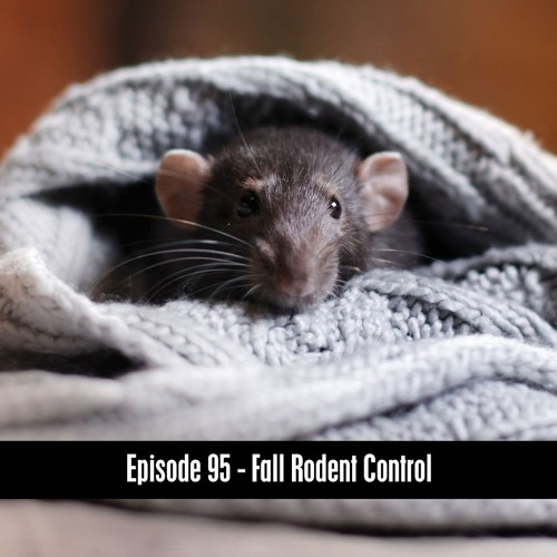 D&B Podcast Episode 95 - Fall Rodent Control