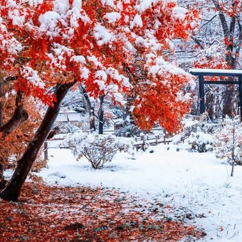 雪月花-Snow,Moon&Flower