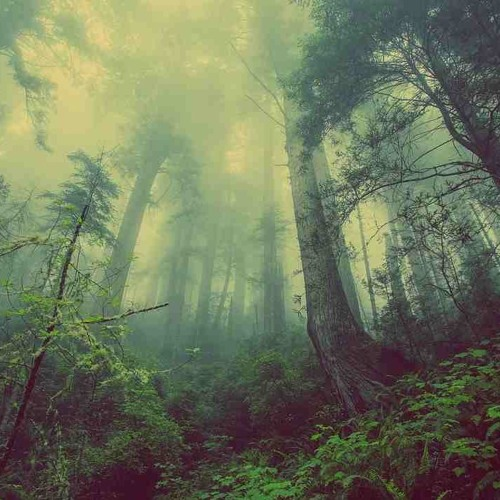 Artificial Forests Vs Natural Grasslands: Lessons from past mistakes