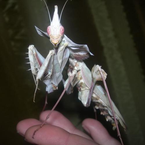 dj mantis - psychic
