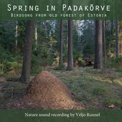 Kevad Padakõrves - Spring in Padakõrve
