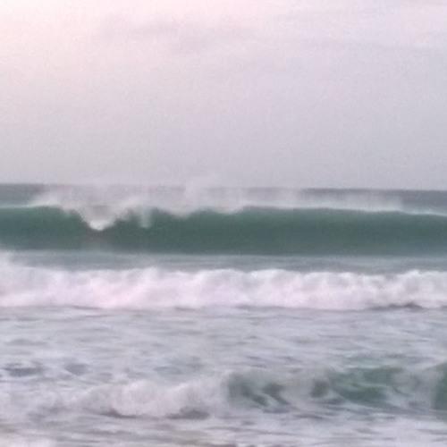 Pajaros del Mar