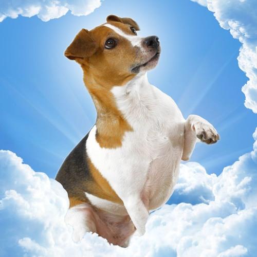 When Dog God Spoke to Moses, A Neighborhood Pug by Jon Sindell