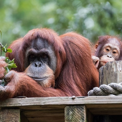 Complex World of Palm Oil