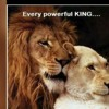 Lion TDS