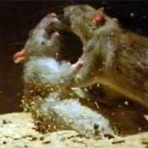 Rat Battle Rat God Vs Rat Devil By Autisticyodel Autisticyodel