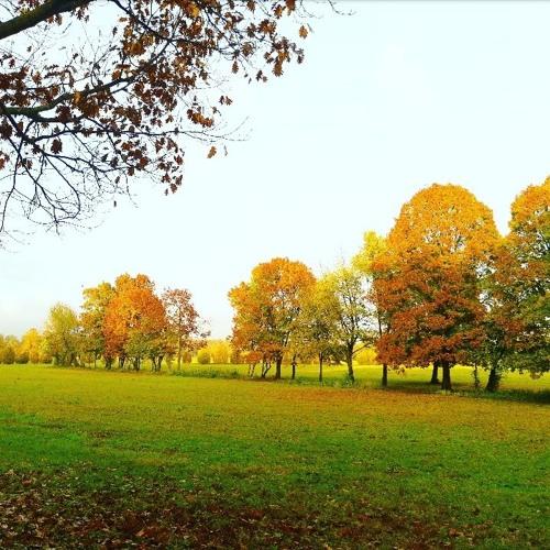 Una storia per l'autunno - Perchè I Sempreverdi Non Perdono Le Foglie
