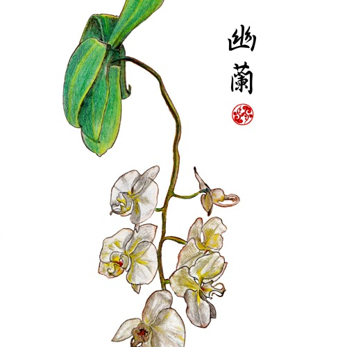 Yolan 幽蘭, Solitary Orchid