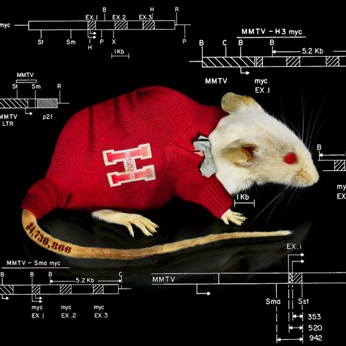The Mouse That Changed Science