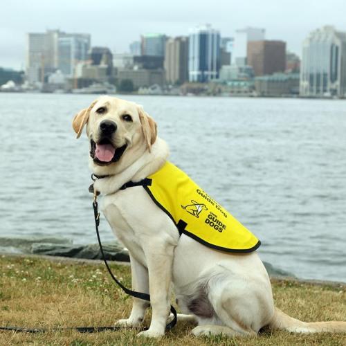 CNIB Guide Dogs