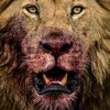 LiON TDS Link Up Freestyle PT1 Mix By Swag