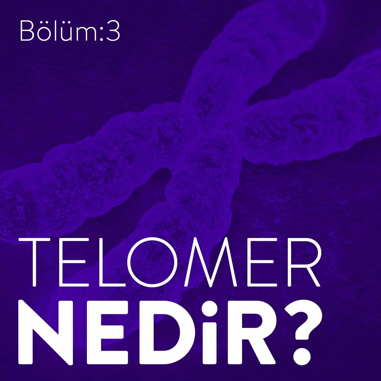 #3: Telomer Nedir Yaşam Süresini Uzatmak Mümkün Mü?
