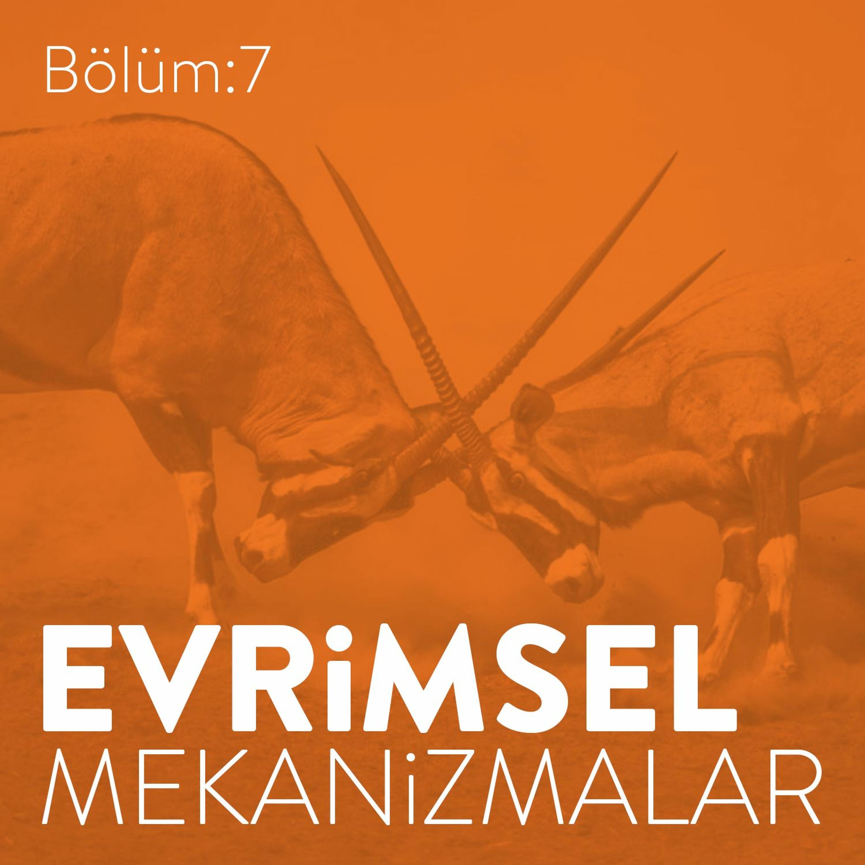 #7: Evrimsel Mekanizmalar