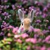Spring Time (Yiruma)