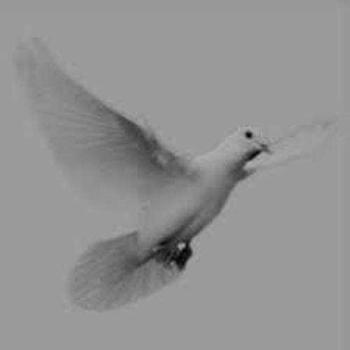 Tinush Salehi - Weiße Taube