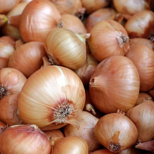 Swiss Up! - Onion market: A Swiss tradition