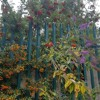Fertilizer - James Fauntleroy Cover