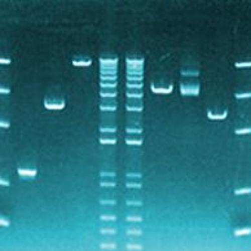 355 Biologie moléculaire