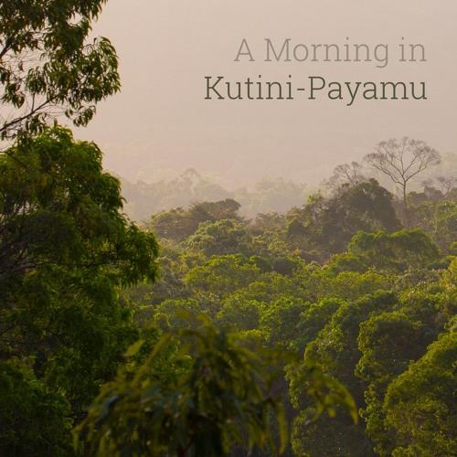 New Album - 'A Morning in Kutini-Payamu'. Recorded in Iron Range NP, Queensland