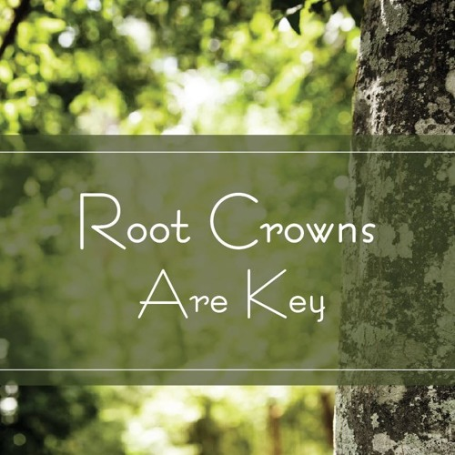 Root Crowns Are Key