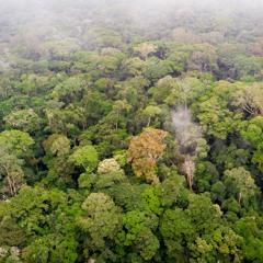 Congo Basin Rainforest 2018