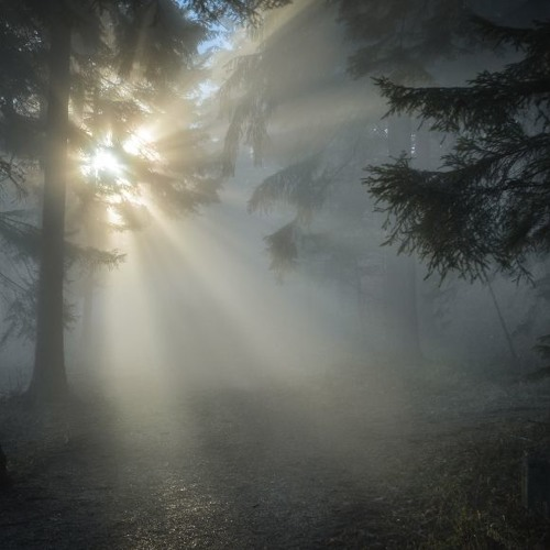 Meditations of Light and Darkness