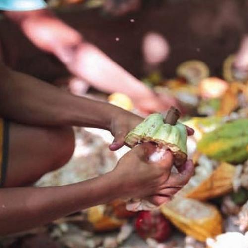 Todo chocolate à venda no Brasil está contaminado pelo trabalho infantil; entenda