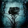 Black Rose (remastered) - Feat. 4EverFreeBrony