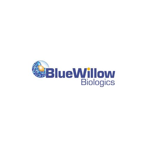 BlueWillow Biologics David Peralta - Oct 2018