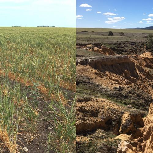 Soil security: running down a dream
