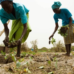 FAO Podcast - Sustainable mechanization for Africa