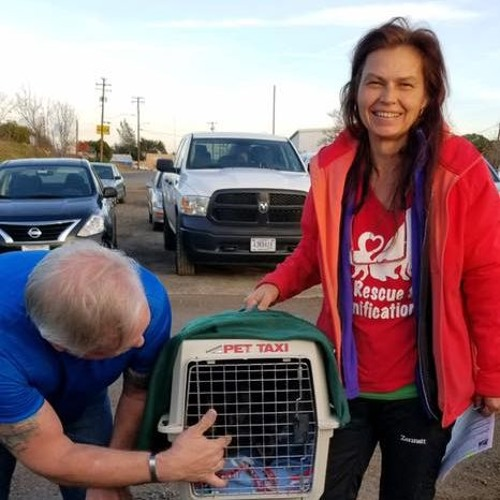 Camp Fire Pet Rescue & Reunification Butte County
