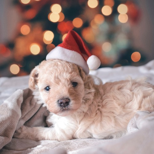 Para Navidad 2018