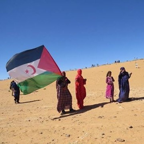 Bob Koigi: Why the world should pay more attention to Western Sahara conflict