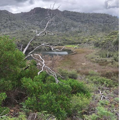 A Lagoon in Tasmania - pobblebonk frogs