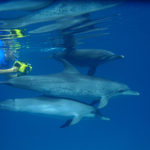 Dr. Denise Herzing: Wild Dolphin Project Founder