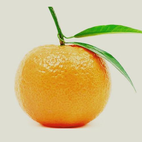 Tangerine by Arabella Arnott