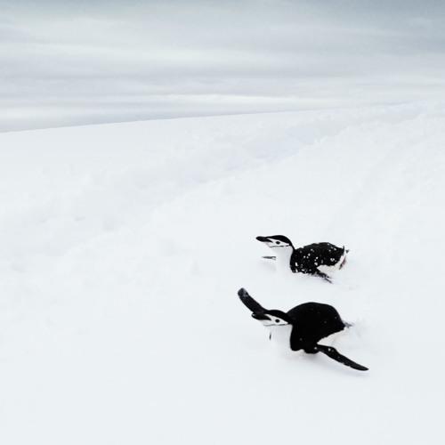 ジェットペンギン2号