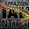 THE AMAZONIAN GIANT CENTIPEDE...and other creepy creatures