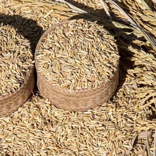 ASEAN needs to do more to maintain its emergency rice reserves and use them efficiently
